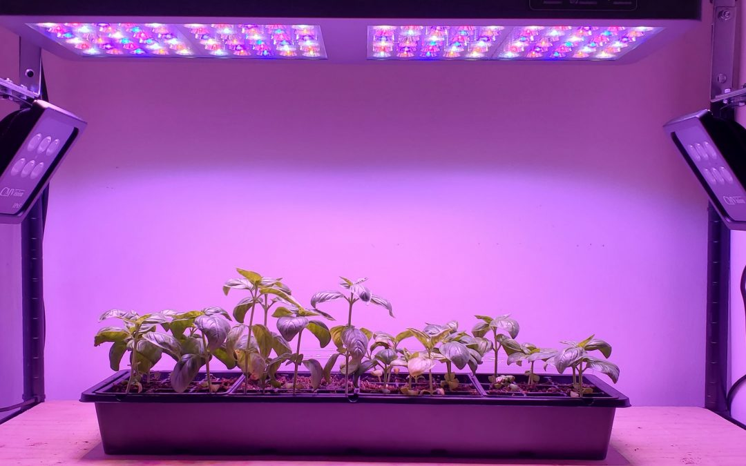 The Effect of Near-Infrared Radiation on Plants